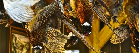 Londons Märkte – Real Food und Borough Market