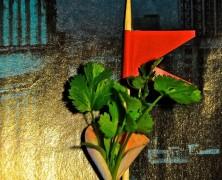 Food & Obsession 3 – Koriander